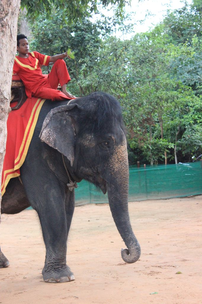 un éléphant à touffe trop choupinou