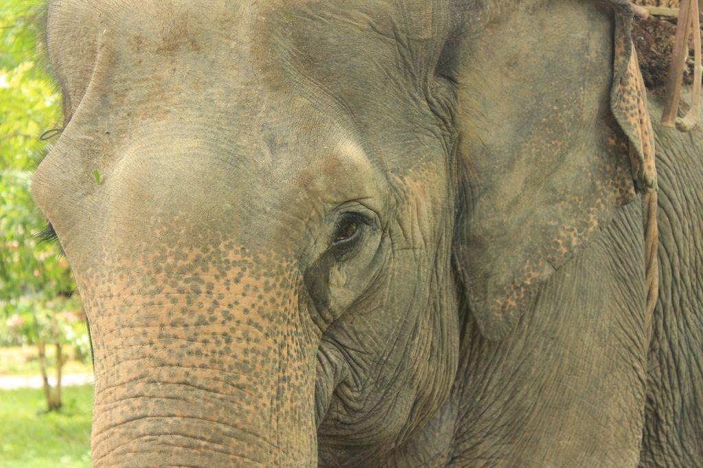 notre éléphant à Ban Kiet ngong