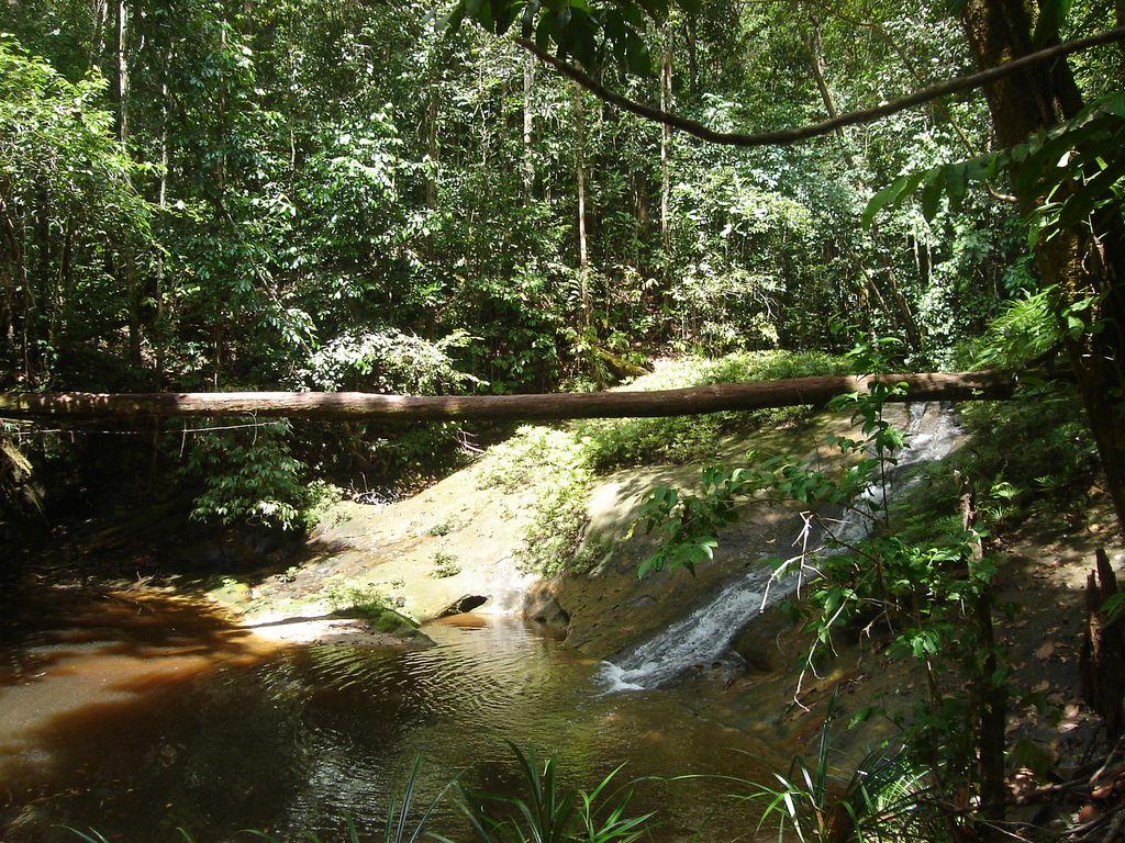 Forêt de Sepilok