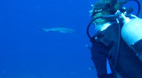 Bornéo: plongée à Sipadan!