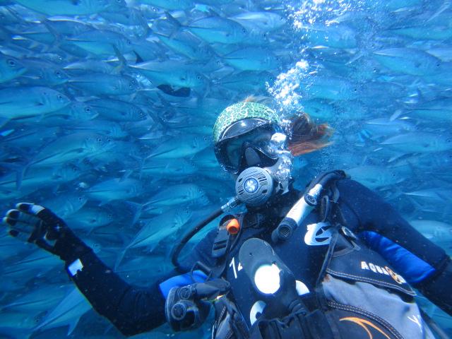 au milieu des jack fish