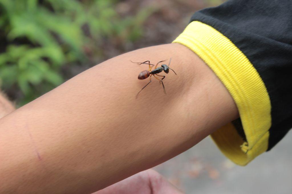 une fourmie!