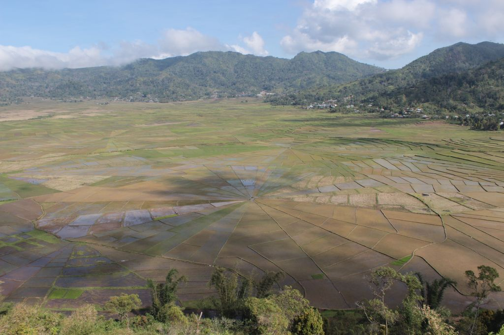 spider rice fields